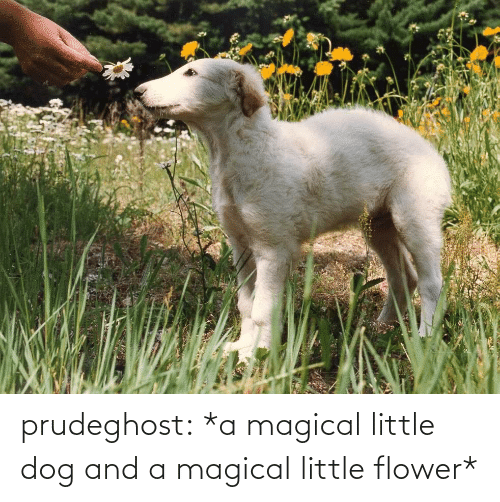 Flower: prudeghost:  *a magical little dog and a magical little flower*