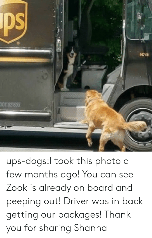 Dogs, Target, and Tumblr: ps  4701  DOT 021800 ups-dogs:I took this photo a few months ago! You can see Zook is already on board and peeping out! Driver was in back getting our packages! Thank you for sharing Shanna
