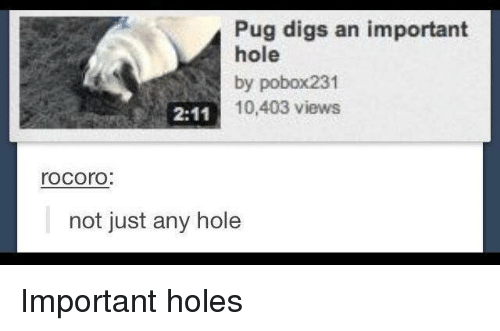 Holes, Pug, and Hole: Pug digs an important  hole  by pobox231  10,403 views  rocorO  not just any hole Important holes
