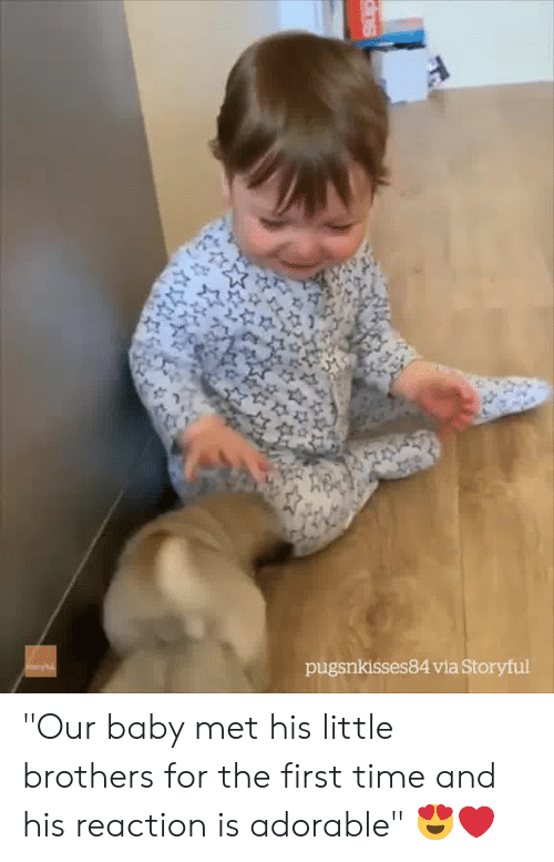 "Time, Adorable, and Baby: pugsnkisses84 via Storyful ""Our baby met his little brothers for the first time and his reaction is adorable"" 😍❤️"