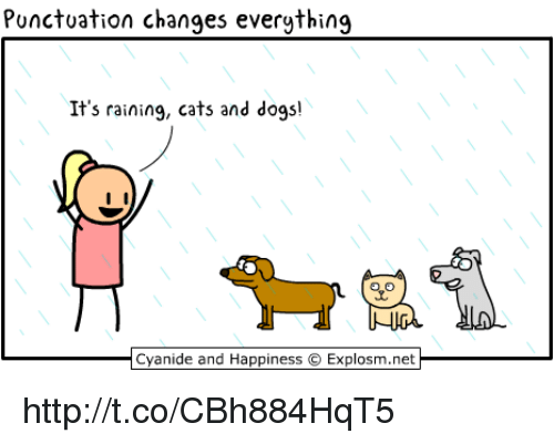 Omg Video On Raining Dogs And Cats
