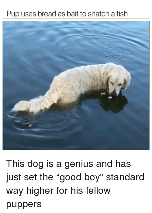 "Funny, Fish, and Genius: Pup uses bread as bait to snatch a fish This dog is a genius and has just set the ""good boy"" standard way higher for his fellow puppers"