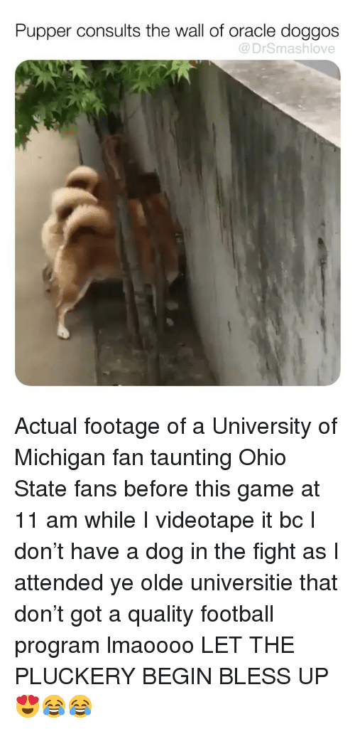 Bless Up, Football, and Memes: Pupper consults the wall of oracle doggos  @ DrSmashlove Actual footage of a University of Michigan fan taunting Ohio State fans before this game at 11 am while I videotape it bc I don't have a dog in the fight as I attended ye olde universitie that don't got a quality football program lmaoooo LET THE PLUCKERY BEGIN BLESS UP 😍😂😂