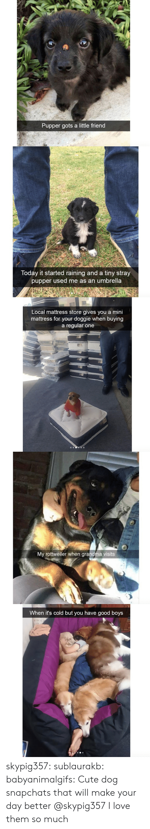 Cute, Grandma, and Love: Pupper gots a little friend   Today it started raining and a tiny stray  pupper used me as an umbrella   Local mattress store gives you a mini  mattress for your doggie when buying  a regular one   My rottweiler when grandma visits   When it's cold but you have good boys skypig357: sublaurakb:   babyanimalgifs:  Cute dog snapchats that will make your day better  @skypig357    I love them so much
