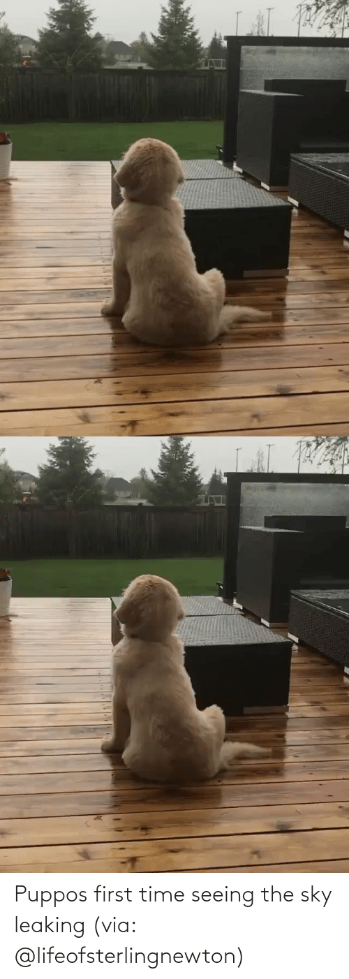 The Sky: Puppos first time seeing the sky leaking(via: @lifeofsterlingnewton)