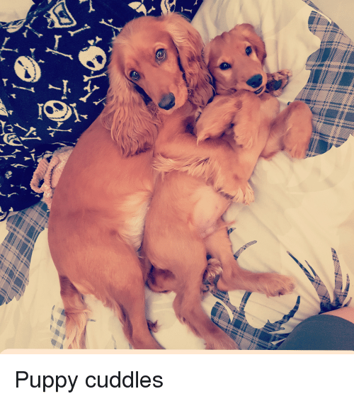 Puppy, Snuggles, and Cuddles: Puppy cuddles