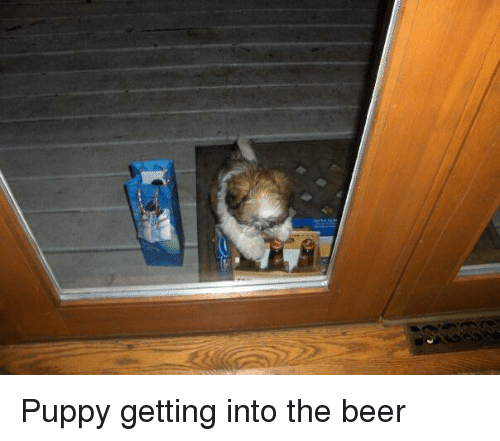 Beer, Puppy, and The