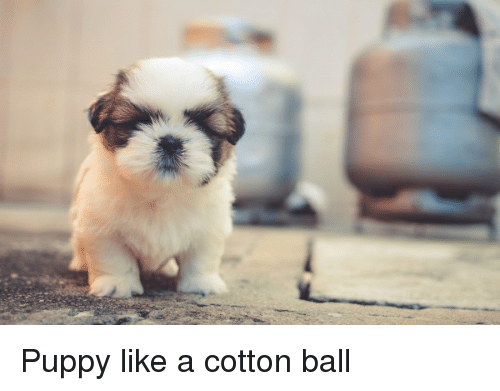 Puppy, Cotton, and Ball