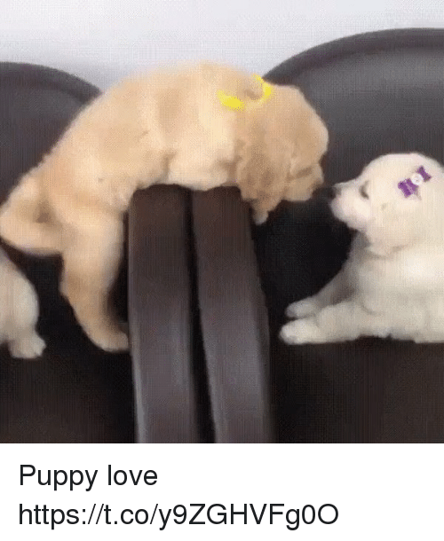 Love, Puppy, and Puppy-Love: Puppy love https://t.co/y9ZGHVFg0O