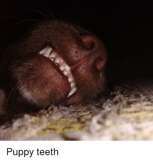 Puppy and Teeth