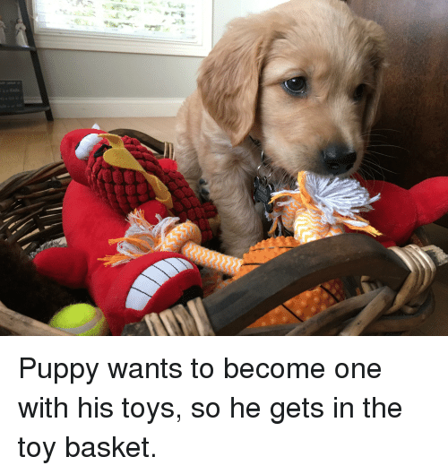 Puppy, Toys, and One