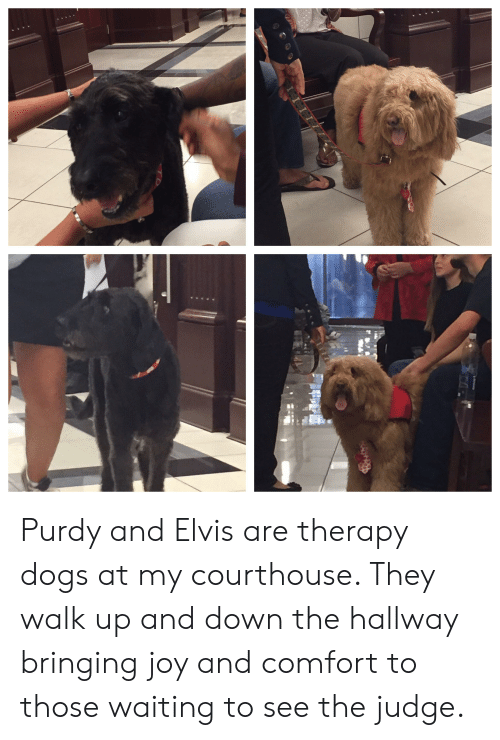 Dogs, Waiting..., and Joy: Purdy and Elvis are therapy dogs at my courthouse. They walk up and down the hallway bringing joy and comfort to those waiting to see the judge.
