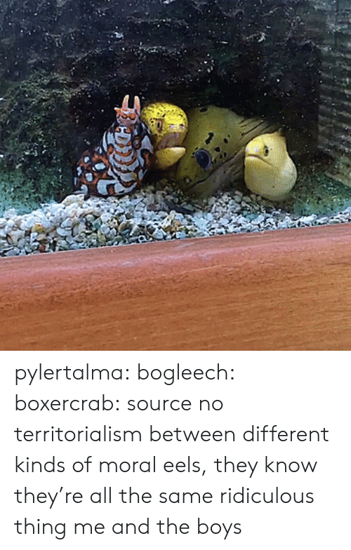 Instagram, Taken, and Tumblr: pylertalma:  bogleech:  boxercrab: source no territorialism between different kinds of moral eels, they know they're all the same ridiculous thing   me and the boys