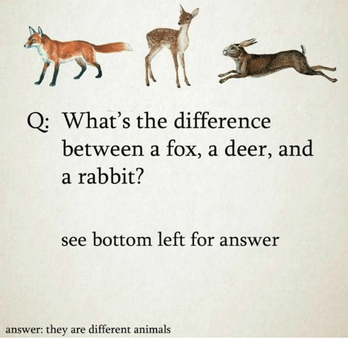 Bottoming: Q: What's the difference  between a fox, a deer, and  a rabbit?  see bottom left for answer  answer: they are different animals