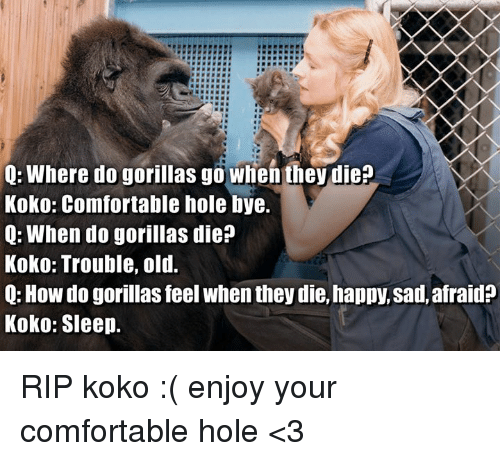 Comfortable, Happy, and Old: Q: Where do gorillas go when they die?  Koko: Comfortable hole bye.  Q: When do gorillas die?  Koko: Trouble, old.  Q: How do gorillas feel when they die, happy, sad, afraid?  Koko: Sleep. RIP koko :( enjoy your comfortable hole <3