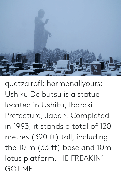 Tumblr, Blog, and Http: quetzalrofl: hormonallyours:  Ushiku Daibutsu is a statue located in Ushiku, Ibaraki Prefecture, Japan. Completed in 1993, it stands a total of 120 metres (390 ft) tall, including the 10m (33 ft) base and 10m lotus platform.  HE FREAKIN' GOT ME