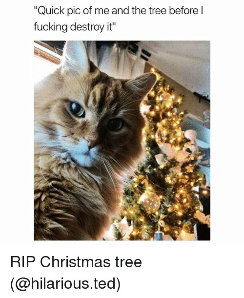 """Christmas, Fucking, and Funny: """"Quick pic of me and the tree before l  fucking destroy it"""" RIP Christmas tree (@hilarious.ted)"""