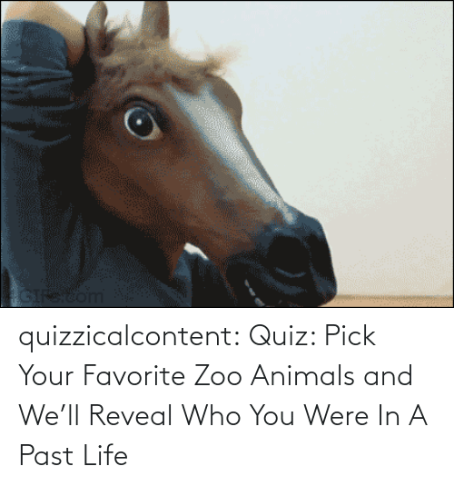 brady: quizzicalcontent:    Quiz: Pick Your Favorite Zoo Animals and We'll Reveal Who You Were In A Past Life