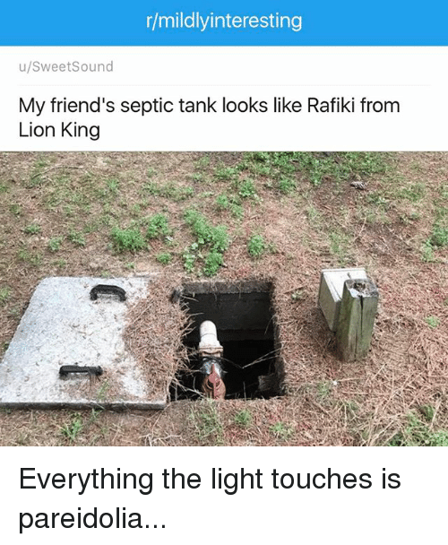 25 Best Memes About Everything The Light Touches Everything The Light Touches Memes