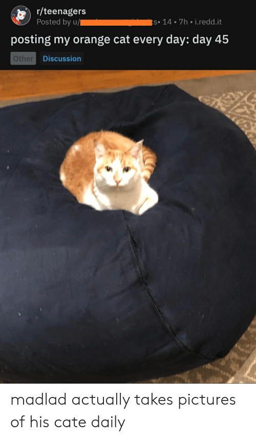 Orange, Pictures, and Cat: r/teenagers  Posted by u/  s 14 7h i.redd.it  posting my orange cat every day: day 45  Other  Discussion madlad actually takes pictures of his cate daily