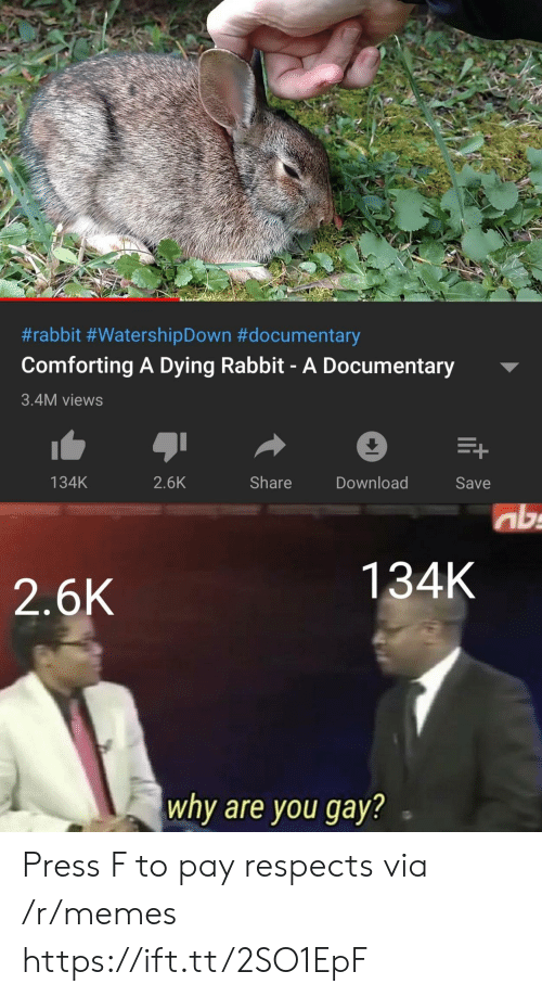 Memes, Rabbit, and Gay:  #rabbit #WatershipDown #documentary  Comforting A Dying Rabbit- A Documentary  3.4M views  Share  134K  2.6K  Download  Save  ab  134K  2.6K  why are you gay? Press F to pay respects via /r/memes https://ift.tt/2SO1EpF