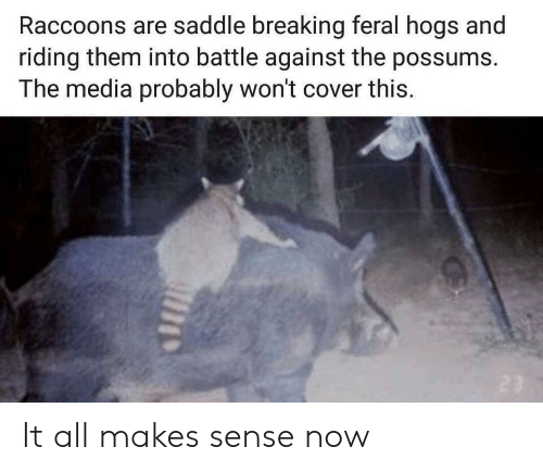 Media, Them, and All: Raccoons are saddle breaking feral hogs and  riding them into battle against the possums.  The media probably won't cover this. It all makes sense now
