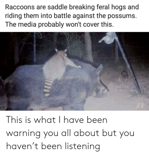 Been, Haven, and Media: Raccoons are saddle breaking feral hogs and  riding them into battle against the possums.  The media probably won't cover this This is what I have been warning you all about but you haven't been listening