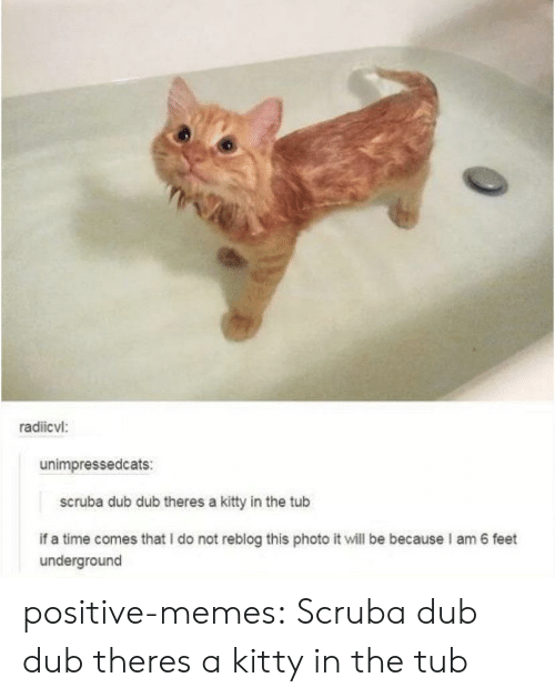 Memes, Tumblr, and Blog: radiicvl:  unimpressedcats:  scruba dub dub theres a kitty in the tub  if a time comes that I do not reblog this photo it will be because I am 6 feet  underground positive-memes:  Scruba dub dub theres a kitty in the tub