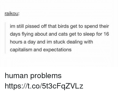 Cats, Memes, and Birds: raikou  im still pissed off that birds get to spend their  days flying about and cats get to sleep for 16  hours a day and im stuck dealing with  capitalism and expectations human problems https://t.co/5t3cFqZVLz