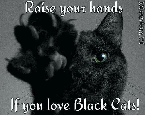 Cats, Love, and Memes: Raise your hands  If you love Black Cats!