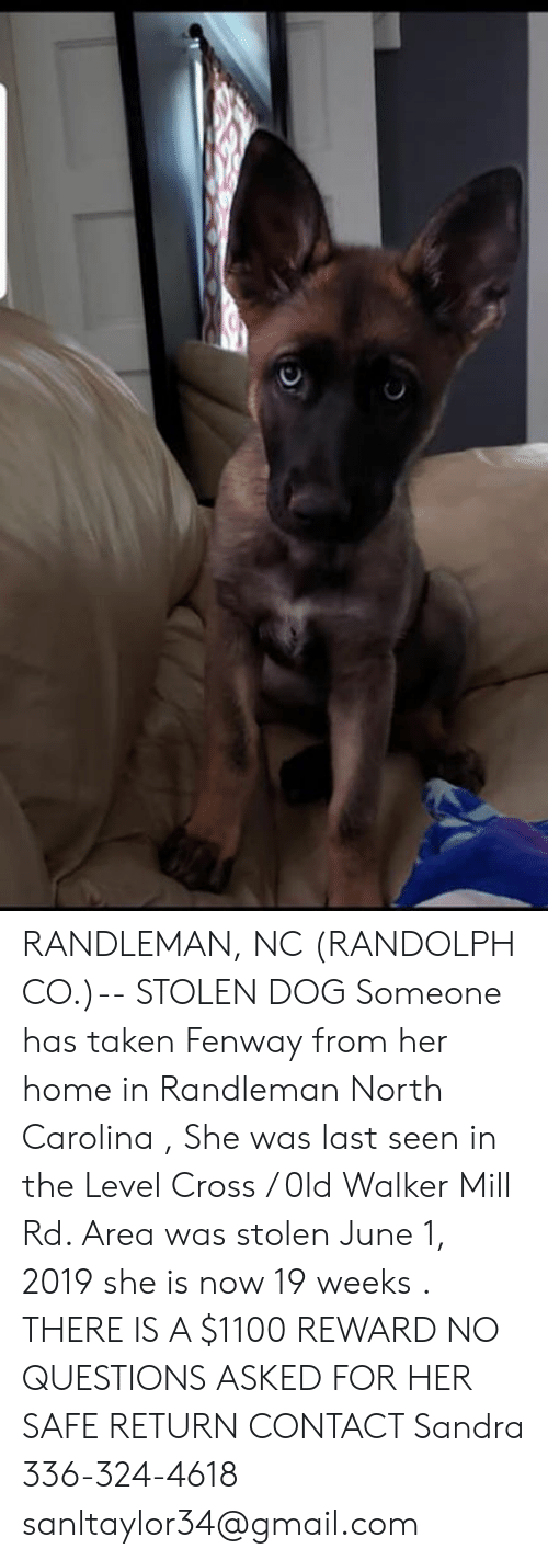 Memes, Taken, and Cross: RANDLEMAN, NC (RANDOLPH CO.)-- STOLEN DOG  Someone has taken Fenway from her home in Randleman North Carolina , She was last seen in the Level Cross / 0ld Walker Mill Rd. Area was stolen June 1, 2019 she is now 19 weeks . THERE IS A $1100 REWARD NO QUESTIONS ASKED FOR HER SAFE RETURN  CONTACT Sandra  336-324-4618 sanltaylor34@gmail.com