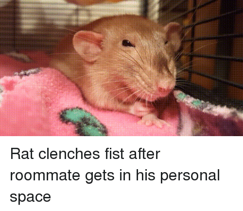 Funny, Roommate, and Space: Rat clenches fist after roommate gets in his personal space