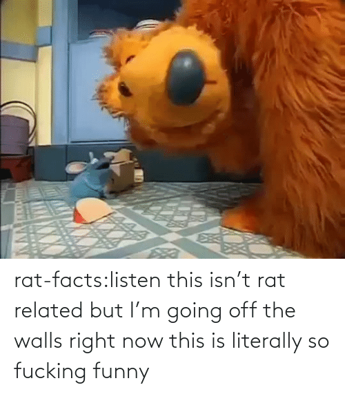listen: rat-facts:listen this isn't rat related but I'm going off the walls right now this is literally so fucking funny