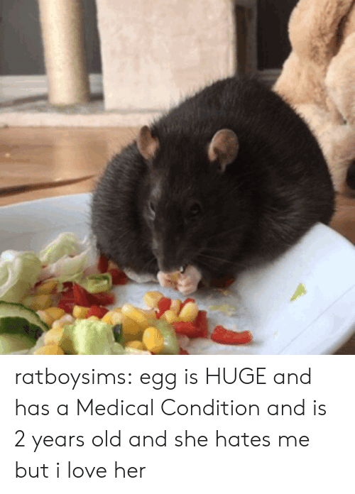 Love, Tumblr, and Blog: ratboysims:  egg is HUGE and has a Medical Condition and is 2 years old and she hates me but i love her