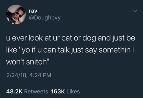"Be Like, Snitch, and Yo: rav  @Doughbvy  u ever look at ur cat or dog and just be  like ""yo if u can talk just say somethin  won't snitch""  2/24/18, 4:24 PM  48.2K Retweets 163K Likes"