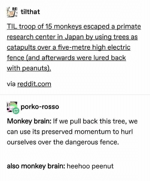monkeys: RE tilthat  TIL troop of 15 monkeys escaped a primate  research center in Japan by using trees as  catapults over a five-metre high electric  fence (and afterwards were lured back  with peanuts)  via reddit.com  porko-rosso  Monkey brain: If we pull back this tree, we  can use its preserved momentum to hurl  ourselves over the dangerous fence.  also monkey brain: heehoo peenut