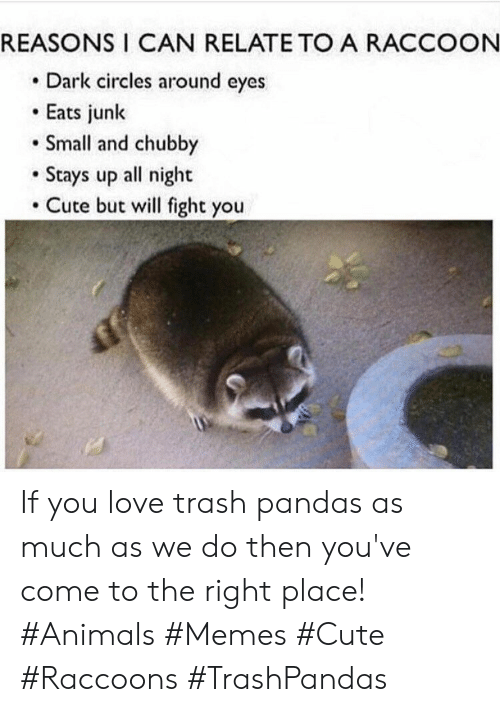 Animals, Cute, and Love: REASONS I CAN RELATE TO A RACCOON  Dark circles around eyes  Eats junk  Small and chubby  Stays up all night  Cute but will fight you If you love trash pandas as much as we do then you've come to the right place! #Animals #Memes #Cute #Raccoons #TrashPandas