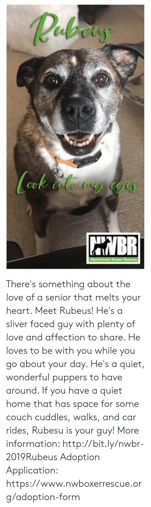 Love, Memes, and Boxer: Rebaus  HNBR  Northwest Boxer Rescue There's something about the love of a senior that melts your heart. Meet Rubeus! He's a sliver faced guy with plenty of love and affection to share. He loves to be with you while you go about your day. He's a quiet, wonderful puppers to have around. If you have a quiet home that has space for some couch cuddles, walks, and car rides, Rubesu is your guy!   More information: http://bit.ly/nwbr-2019Rubeus  Adoption Application: https://www.nwboxerrescue.org/adoption-form