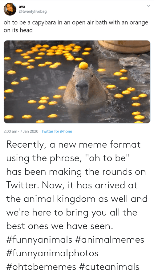 "We Have: Recently, a new meme format using the phrase, ""oh to be"" has been making the rounds on Twitter. Now, it has arrived at the animal kingdom as well and we're here to bring you all the best ones we have seen. #funnyanimals #animalmemes #funnyanimalphotos #ohtobememes #cuteanimals"