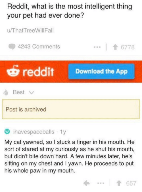 Reddit, Best, and What Is: Reddit, what is the most intelligent thing  your pet had ever done?  u/ThatTreeWillFal  4243 Comments  6778  reddit Download the App  Best  Post is archived  ihavespaceballs 1y  My cat yawned, so I stuck a finger in his mouth. He  sort of stared at my curiously as he shut his mouth,  but didn't bite down hard. A few minutes later, he's  sitting on my chest and I yawn. He proceeds to put  his whole paw in my mouth  1657