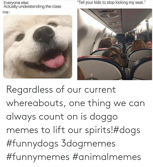 Memes To: Regardless of our current whereabouts, one thing we can always count on is doggo memes to lift our spirits!#dogs #funnydogs 3dogmemes #funnymemes #animalmemes