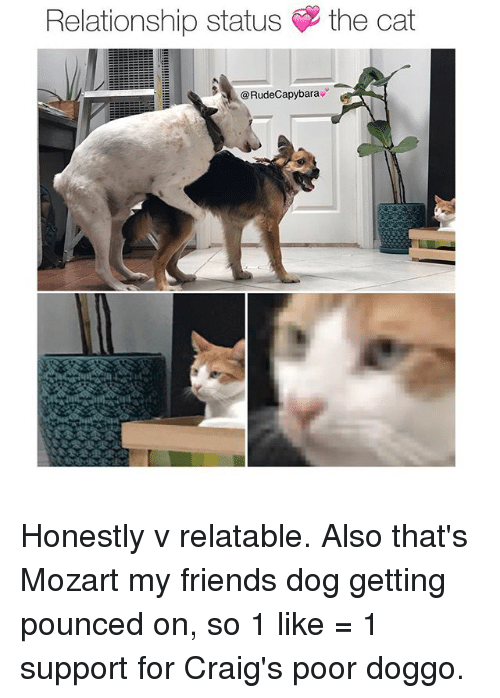 Friends, Memes, and Mozart: Relationship status  the cat  RudeCapybara Honestly v relatable. Also that's Mozart my friends dog getting pounced on, so 1 like = 1 support for Craig's poor doggo.