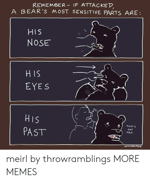 Dank, Memes, and Target: REMEMBER-1F ATTACKED  A BEAR'S MOST SENSITIVE PARTS ARE  HIS  NOSE  HIS  EYES  HIS  THAT'S  NOT  PAST  FAIR  NATIANWPYLE meirl by throwramblings MORE MEMES