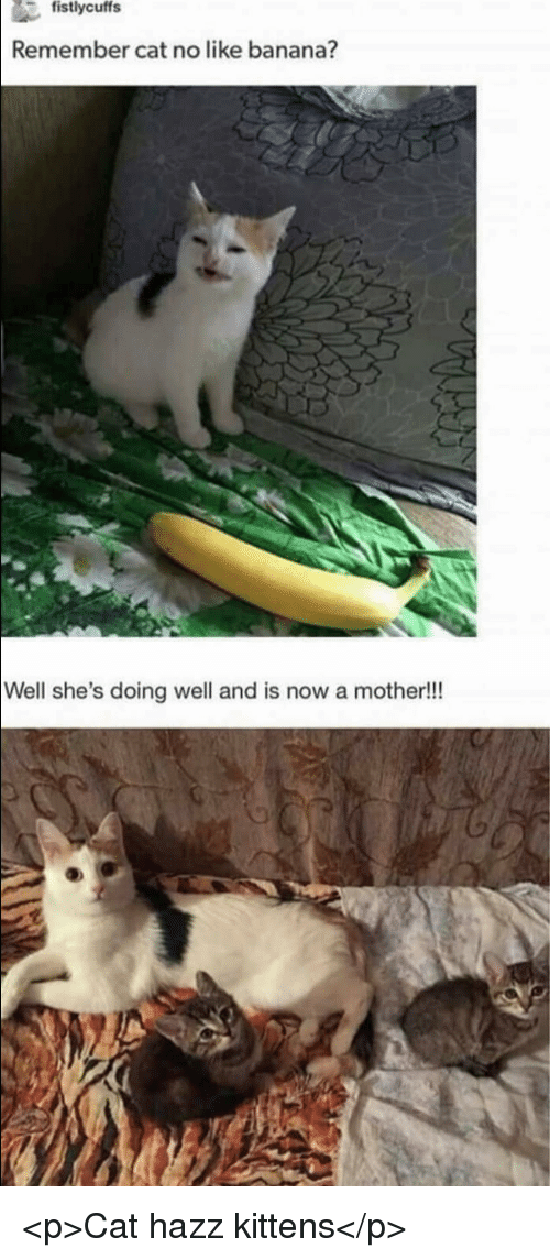 Banana, Kittens, and Cat: Remember cat no like banana?  Well she's doing well and is now a mother!!! <p>Cat hazz kittens</p>