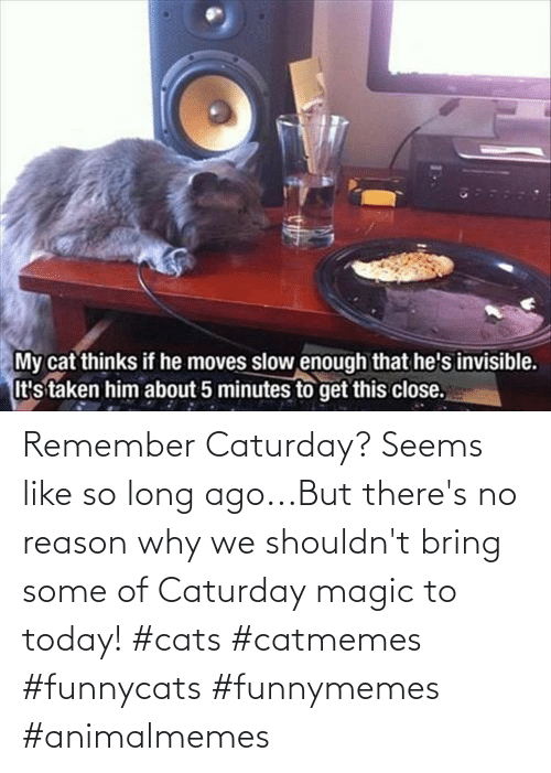 Cats: Remember Caturday? Seems like so long ago...But there's no reason why we shouldn't bring some of Caturday magic to today! #cats #catmemes #funnycats #funnymemes #animalmemes