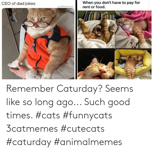so long: Remember Caturday? Seems like so long ago... Such good times. #cats #funnycats 3catmemes #cutecats #caturday #animalmemes
