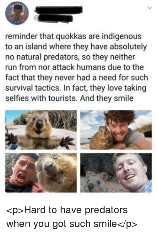indigenous: reminder that quokkas are indigenous  to an island where they have absolutely  no natural predators, so they neither  run from nor attack humans due to the  fact that they never had a need for such  survival tactics. In fact, they love taking  selfies with tourists. And they smile <p>Hard to have predators when you got such smile</p>
