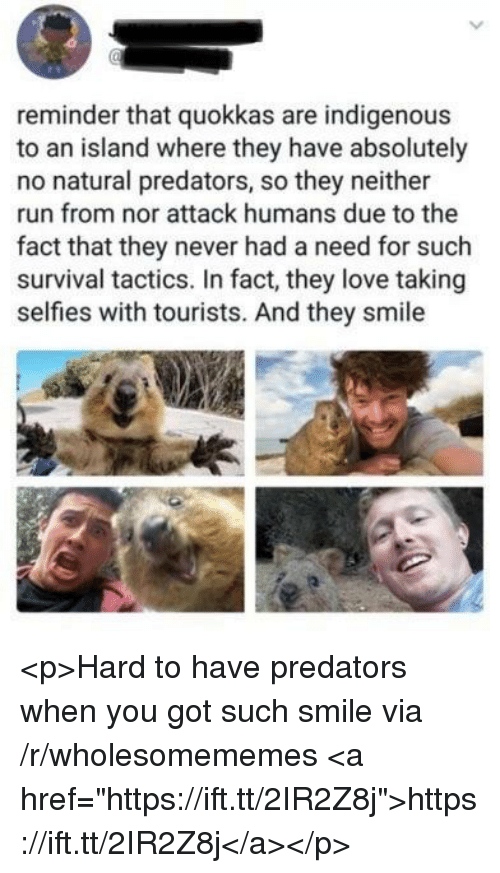 "indigenous: reminder that quokkas are indigenous  to an island where they have absolutely  no natural predators, so they neither  run from nor attack humans due to the  fact that they never had a need for such  survival tactics. In fact, they love taking  selfies with tourists. And they smile <p>Hard to have predators when you got such smile via /r/wholesomememes <a href=""https://ift.tt/2IR2Z8j"">https://ift.tt/2IR2Z8j</a></p>"