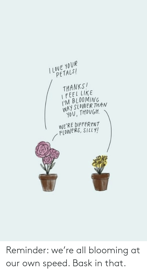 speed: Reminder: we're all blooming at our own speed. Bask in that.