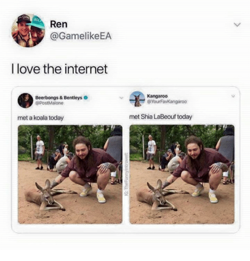 koala: Ren  @GamelikeEA  I love the internet  Beerbongs & Bentleys  @PostMalone  Kangaroo  @YourFavKangaroo  met a koala today  met Shia LaBeouf today
